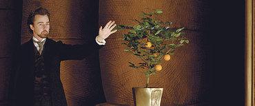 Illusionistnortontree